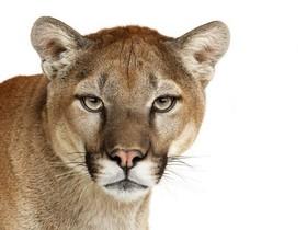OS X Mountain Lion 正式開放下載,大全懶人包看這裡