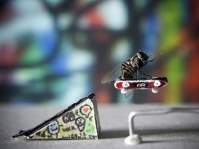 沒有 PS 的創意攝影:蒼蠅演出的趣味照片,可愛到讓你不再討厭它