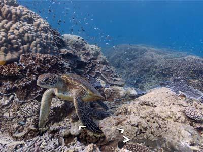 Google 推出 6 處海底街景,不用潛水也可暢遊海底