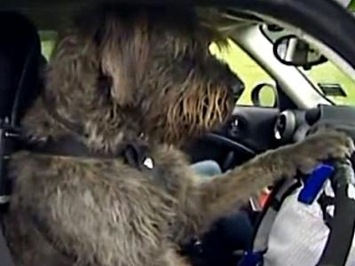 改裝車不稀奇,改裝 Mini cooper 給狗狗學開車才有趣!
