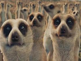 《少年 PI 的奇幻漂流》中,李安如何用「群體模擬」養出很多狐獴?