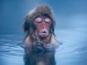 泡湯這麼爽嗎?這些日本雪猴的舒服表情實在太有戲了!
