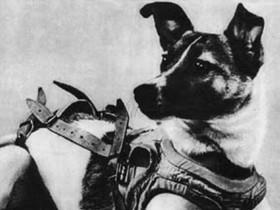 牠的一小步是人類的一大步,那些進行太空任務的動物英雄們