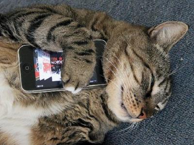 破解都市傳說!iPhone 5s指紋辨識可利用斷指及貓掌通過驗證機制?