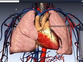 BioDigital 為醫院及研究機構提供人體生理結構互動3D模型,方便醫生解說以及病人理解病情