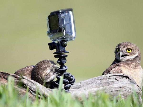 瑞典有人在牧場撿到GoPro,檢查記憶卡之後劇情超展開:相機竟來自雲端!