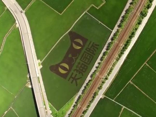 馬雲來台灣種田,還把天貓標誌印到花蓮玉里的稻田裡?