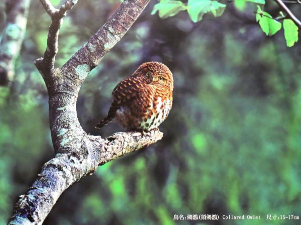 免費入場的 Olympus 台灣野鳥生態攝影展,就在新光信義 A9 館展出