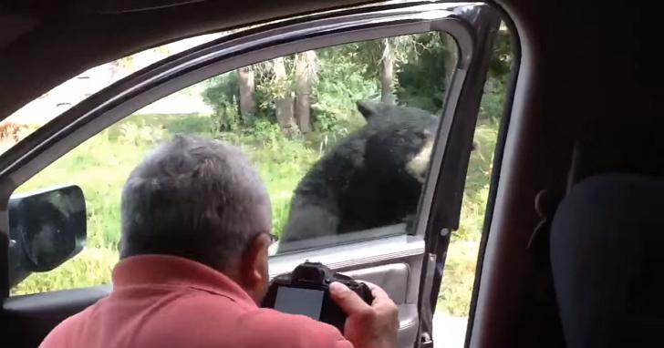 這家人在路上巧遇野生黑熊而興奮拍照,這時黑熊竟然開了車門...