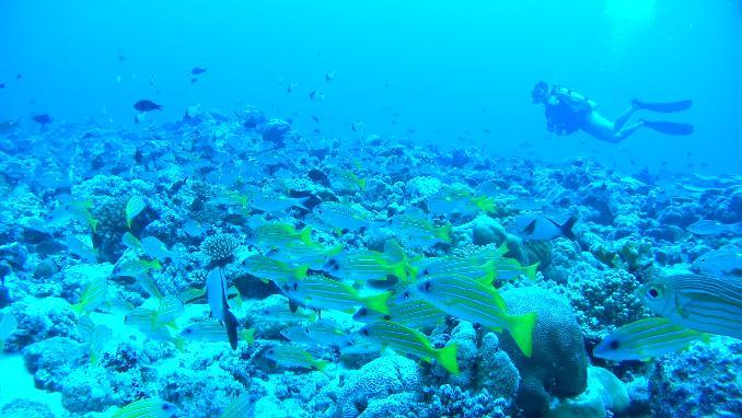 潛入靜謐深海,用運動攝影機記錄內太空的無盡湛藍