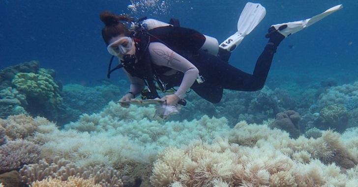 全球暖化問題持續加劇,澳洲大堡礁珊瑚將面臨死亡