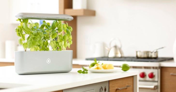 宅在家也能當自耕農,用AVA Byte輕鬆種出多種蔬菜