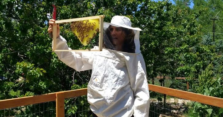 利用物聯網技術記錄、分析蜂巢狀態,讓蜜蜂活得更健康