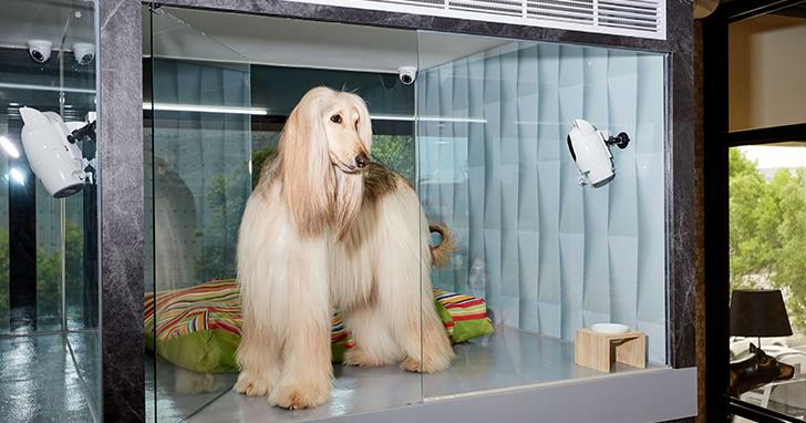 PAWBO 波寶創新科技 攜手 PAWISH 啵希寵物沙龍精品旅店 打造全球第一家零距離的智慧寵物旅館 10.27(五)正式開幕