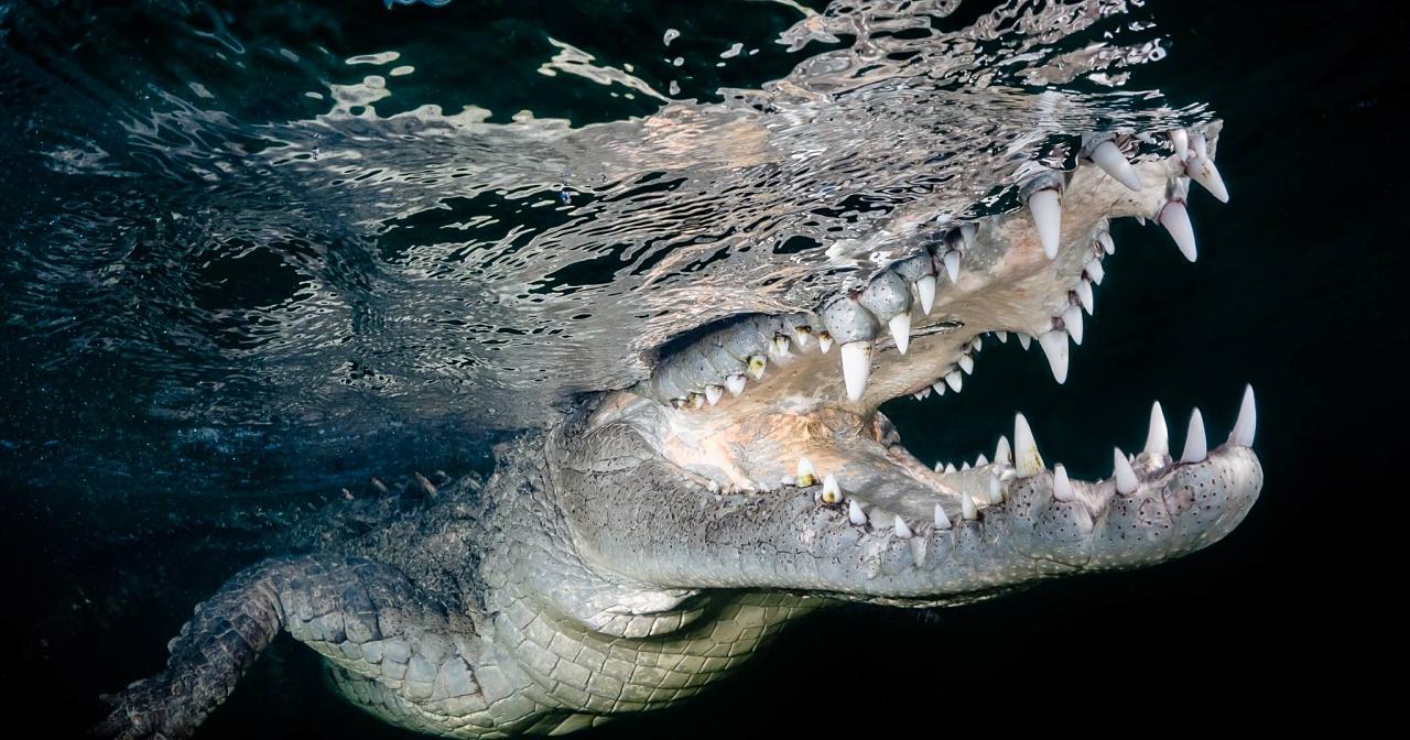 勇闖古巴拍下野生美洲鱷,台灣攝影師獲索尼世界攝影大獎國家獎首獎