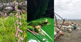 生態攝影師教你用 iPhone X 拍台灣動植物