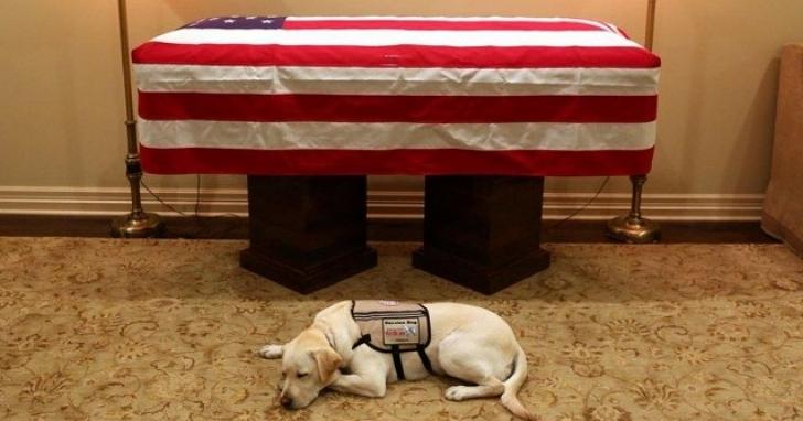 雖然老布希過世,但他的愛犬仍長伴左右