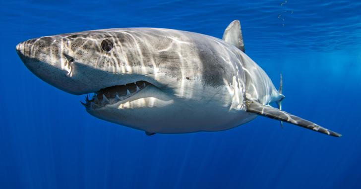 對鯊魚DNA的新研究可能成為治癒癌症等人類疾病的關鍵