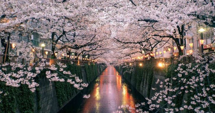 日本櫻花經濟:花期雖短,卻價值千億