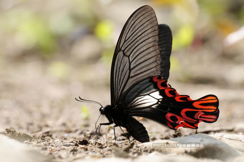 響應世界地球日,Canon舉辦蝴蝶生態攝影展、大型阿生展出珍稀蝴蝶照片
