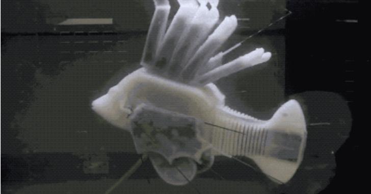 一條魚靠「機械血液」續航 36 小時,背後是電池技術的突破