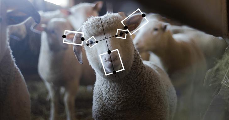 人工智能的下一個道德挑戰:如何對待動物