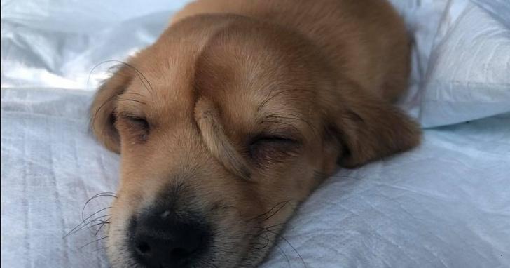 這隻「尾巴長在頭上」的汪星人,爆紅成為美國人最想認養的小狗