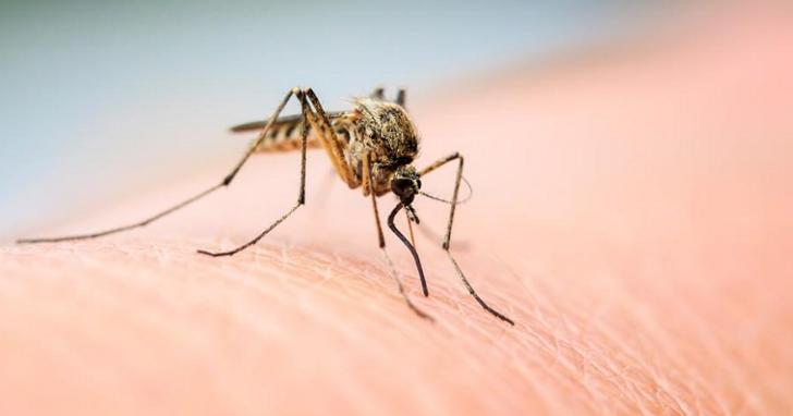 疾管署公布國內首例茲卡病毒感染確診病例,北部40多歲本國籍男子於前往泰國旅遊感染