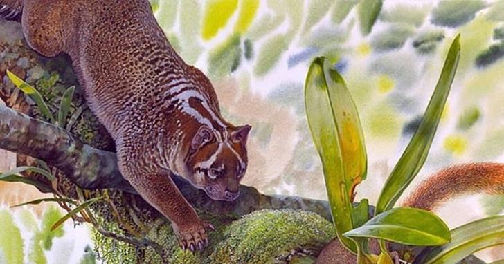 澳洲內陸發現已滅絕數百萬年的新型袋獅化石!體型「小如貓」、曾被譽為「動物界劊子手」