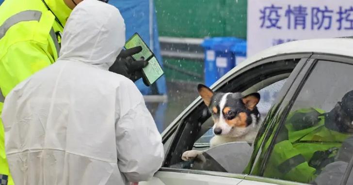 香港出現全球首宗狗隻感染新冠病毒確診,寵物會再傳染新冠病毒給人或是其他寵物嗎?