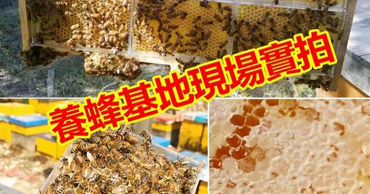 屏東黑巧克力、大樹蜂巢蜜等「小農廣告」根本詐騙!盜圖又裝愛台灣、一頁式廣告只賣劣質中國食品