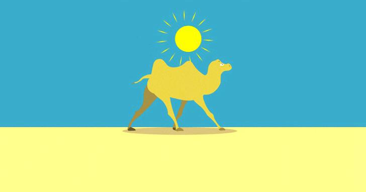 獨角獸不吃香了!矽谷的新寵是「駱駝」