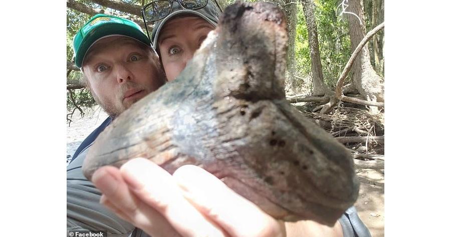 北美一對夫妻發現「遠古巨齒鯊牙齒」化石!體積大如人類手掌、重量約一磅