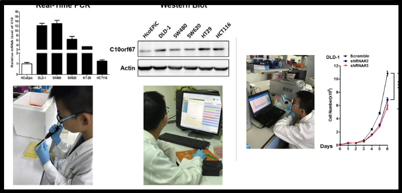 小學生參加學生科研展主題竟是「研究癌症基因」獲獎被罵翻,虎爸道歉:我過度參與了孩子的研究