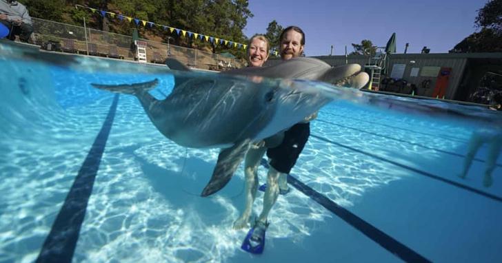價值2600萬美元的機器海豚即將進入中國水族館,看上去就像真的海豚