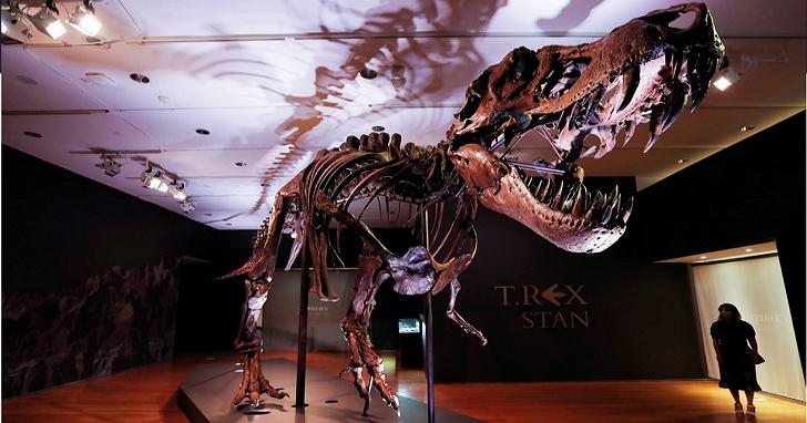 著名的暴龍骨架化石「Stan」將被拍賣,侏儸紀公園起跳價600-800萬美元