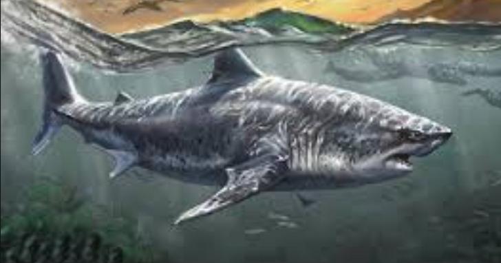 科學家終於將2000萬年前巨齒鯊的體積估算出來,體長超18公尺、體重超48噸