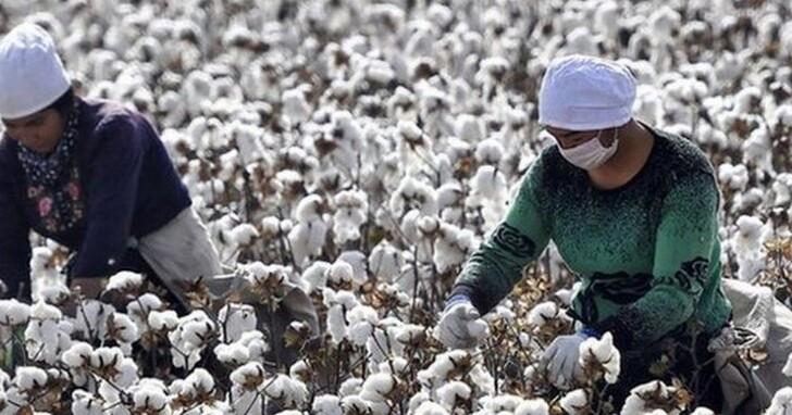 新疆棉花事件,引爆史上最大「被辱華」風波的BCI協會是什麼來歷?