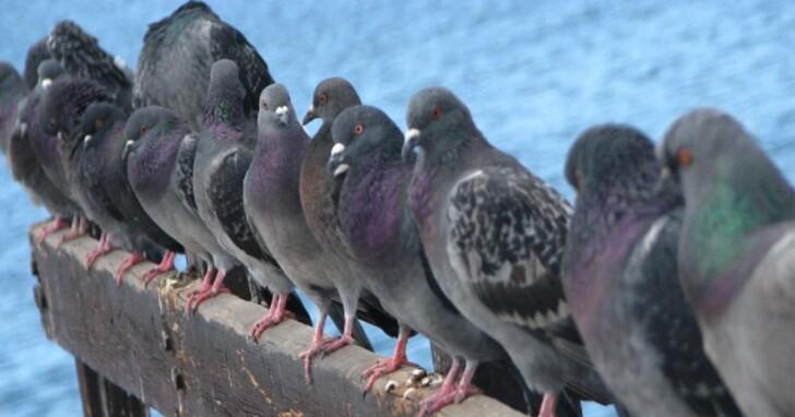 使用者抱怨Starlink星鏈網路有個最大的天敵:鴿子