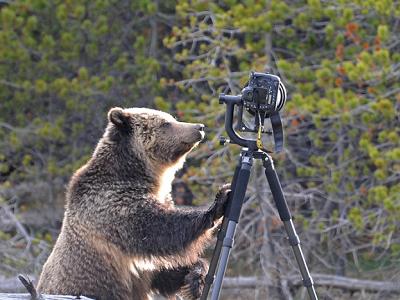 熊出沒注意!Nikon D4 遇上北美灰熊,蹂躪後還能用嗎?