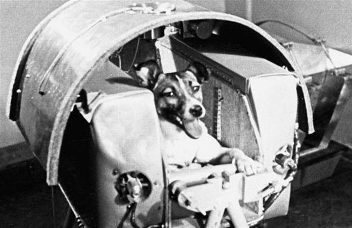 第一個上太空的物種,是蘇聯找來的流浪犬,受訓後並命名為萊卡,在史普尼克二號升空之時一同登上太空,卻從此走上不歸路。