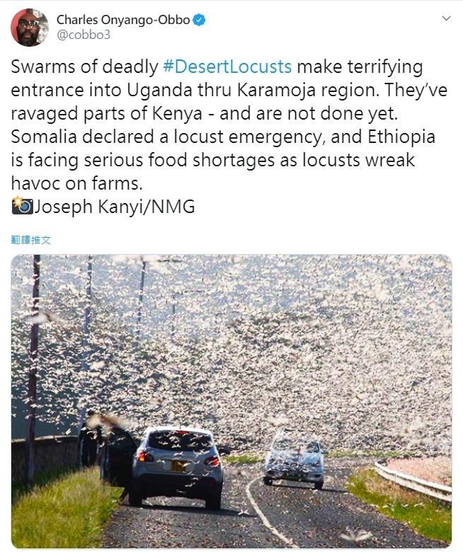烏干達�遇蝗災。圖片來源:Twitter